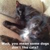 cat and dog friends: SEO-e Link Building blog