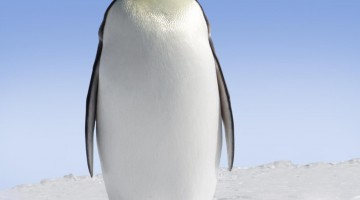 4 SEO Tips to Ensure Your Website Survives Google Penguin